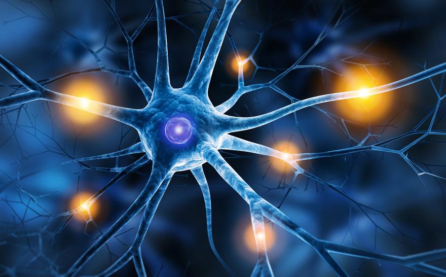 Das vegetative Nervensystem – Brainstrom