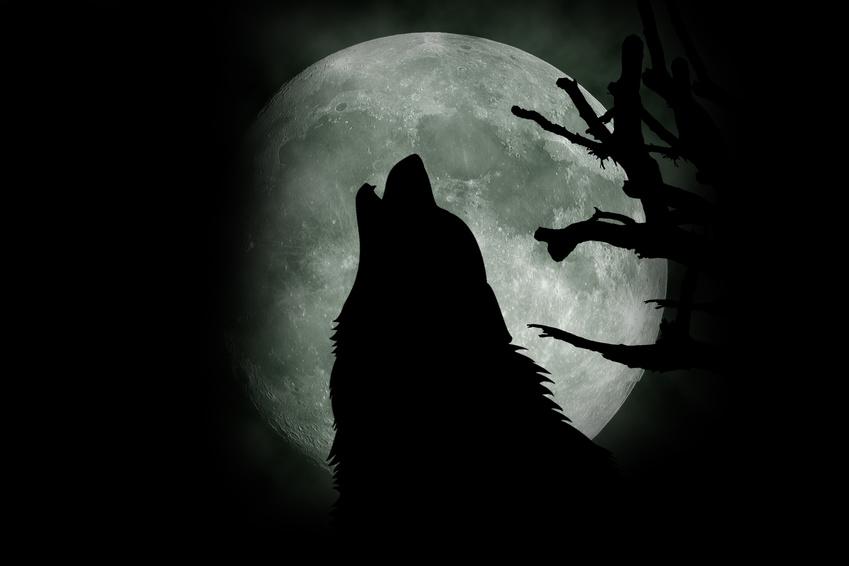 """Der """"einsame Wolf"""" ein Mitarbeite mit geringemCommitment, aber hohem Involvement"""